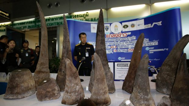 Thai customs officers with almost $6.6 million of seized rhino horns at the customs office in the Suvarnabhumi airport, ...