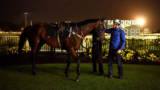 With the champ: Hugh Bowman pats Winx after trackwork.