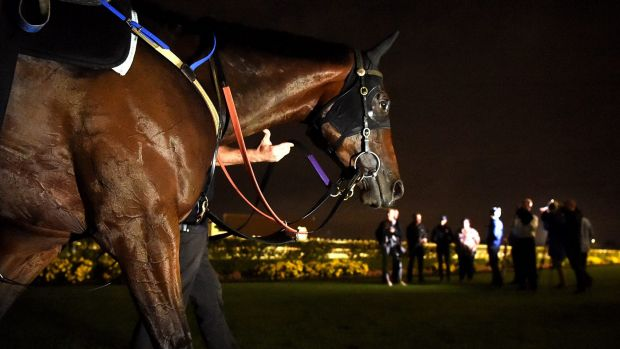 Early morning: Winx is walked after trackwork at Rosehill Gardens on Thursday