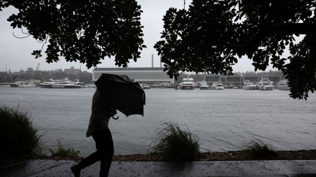A walker gets caught in a rain squall at Jubilee Park along Rozelle Bay.