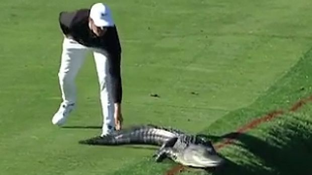 Cody Gribble tangles with an alligator on the Bay Hills Course.