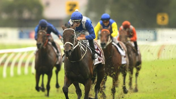 Donkey-licked: Hugh Bowman rides Winx to win the George Ryder Stakes.