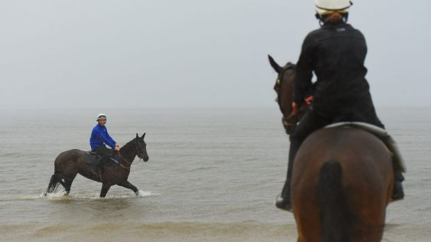 Day after: Trackwork rider Ben Cadden walks Winx through the water at 'Plane Spotting' Beach near Sydney airport.
