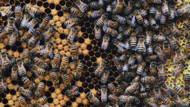 The Department of Parliamentary Services, Australian National University Apiculture Society and engineering firm Aurecon ...