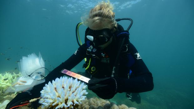 An AIMS researcher surveying thermal stress and bleaching at Taylor Reef off Mission Beach in the central Great Barrier Reef.