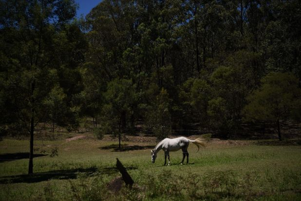 Scenes from St Albans common in the northern Hawkesbury.