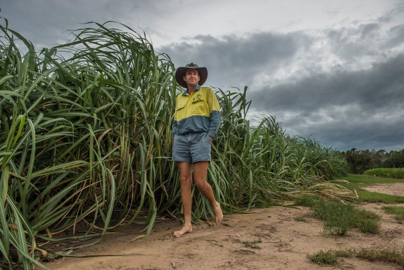 """Sugar cane grower Paul Villis: """"The wind and rain doesn't do it much good but we are pretty lucky sugar cane is ..."""