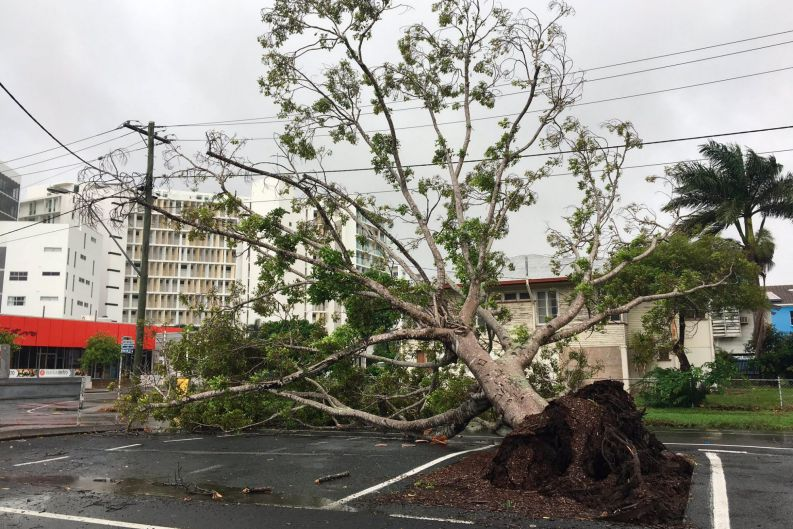 Tree down just outside the ABC Mackay building.