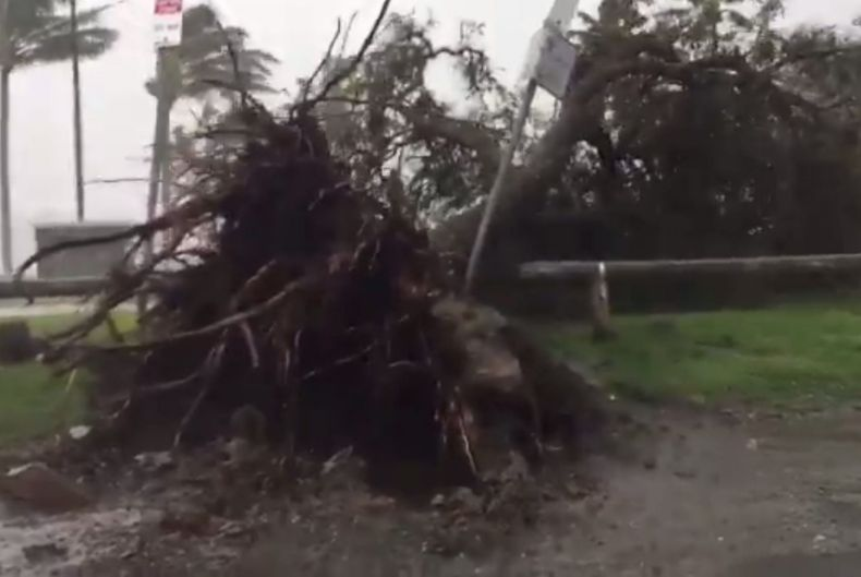 Trees have been uprooted in Airlie Beach as Cyclone Debbie approaches.