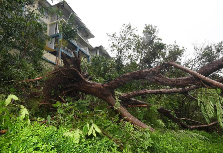 Tree ripped out by the roots in Airlie Beach.