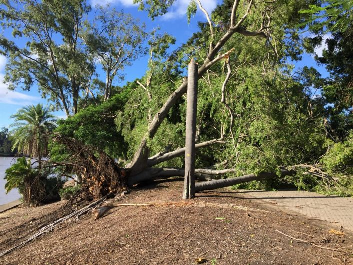 The path at?Brisbane's City Botanic Gardens has been closed after a large tree fell during overnight storms.
