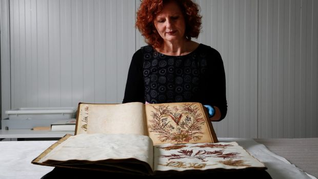 Julie Ryder holds the Port Phillip seaweed album, with the Port Arthur album in the foreground.