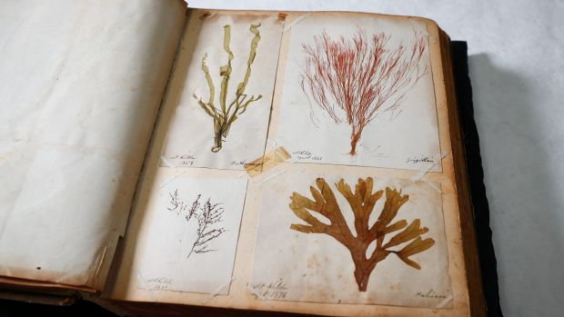The Port Phillip Bay seaweeds are diverse and have maintained their colour.