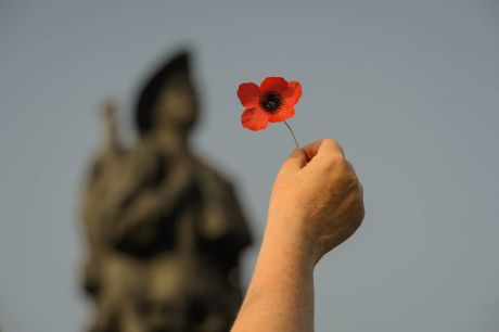 Poppy for remembrance.