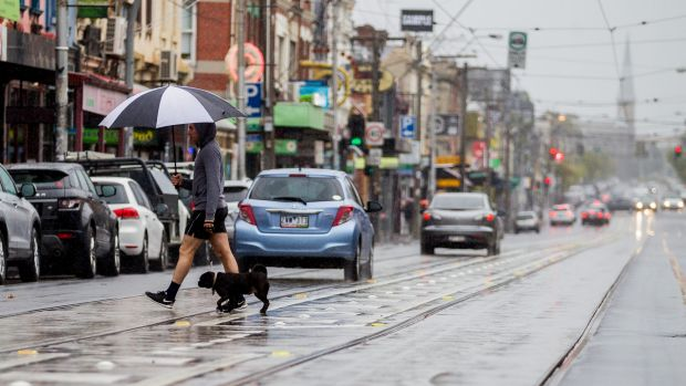 A man is pictured crossing Brunswick St Fitzroy with his dog in the rain on April 9, 2017 in Melbourne, Australia.