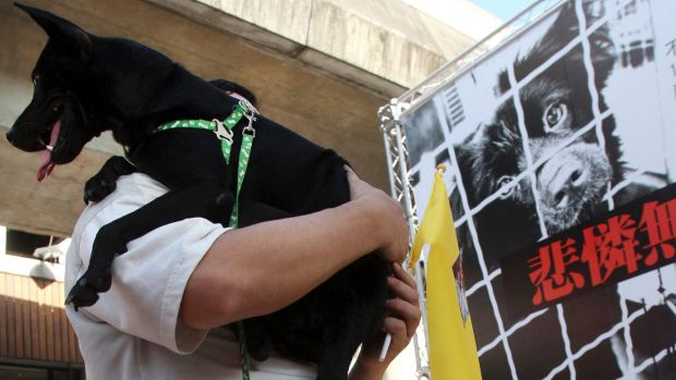 A Taiwanese man holds his dog during a gathering in 2011 to demand that dogs and cats be protected.