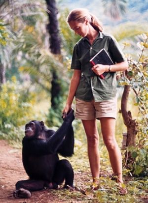 Dr Goodall is best known for her studying and living with wild chimpanzee tribes in Africa.