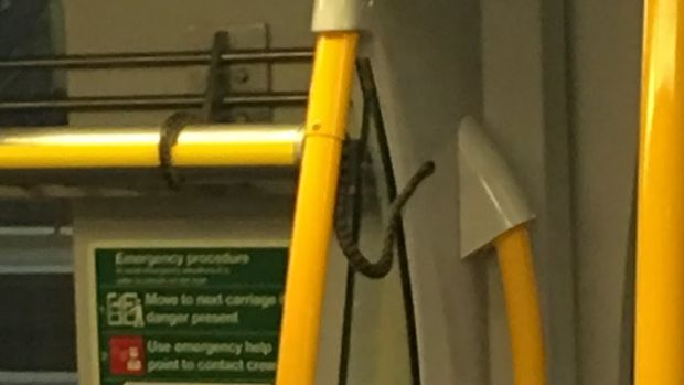 Stunned passengers found the snake on the South Coast Line train.