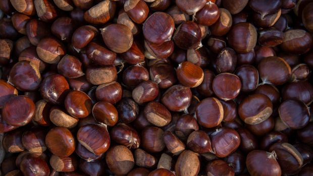 Demand for fresh chestnuts has led to a frenzy of visitors to farms in the Blue Mountains.