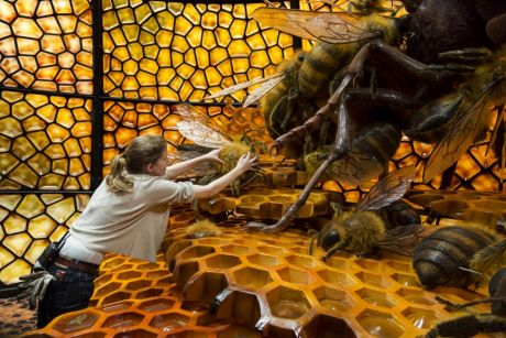 Project supervisor Mona Peters works on the Japanese bee installation, one of the more popular Bug Lab exhibits.