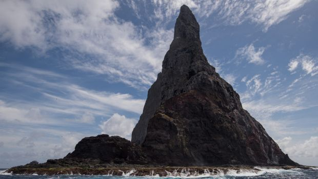 The insect was found on Balls Pyramid near Lord Howe Island.