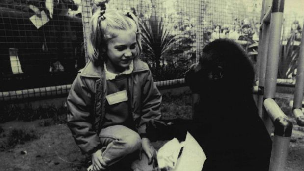 Mzuri plays with his visitor Carla Philpott, 6, at Melbourne Zoo on June 4, 1986.