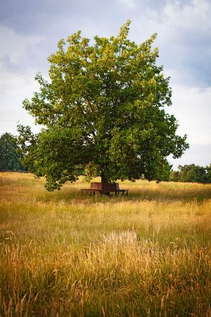 Long-term vision: This oak tree was grown from an acorn at Cruden Farm.