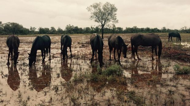 An estimated 35 millimetres of rain fell overnight at Boothulla, west of Charleville.