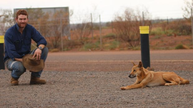 Dr Thomas Newsome, ecologist at Deakin University and the University of Sydney, with a dingo.