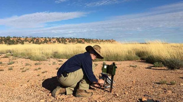Nick Leseberg in the field in Western QLD where he is studying the elusive Night Parrot.