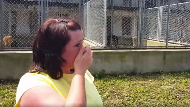 Kerry Elliman cries as she recounts the plight of the dogs that came from Australia.