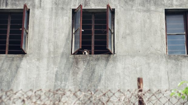 Concrete prison: Once the dogs can no longer entertain, their days are numbered.