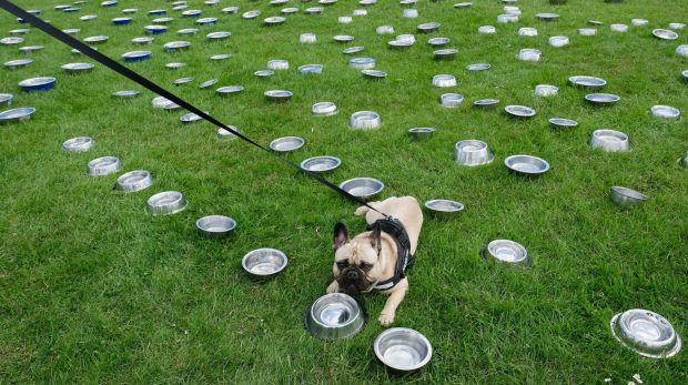 A dog drinks from a bowl at a water station as thousands of excited participants and their owners take part in the Great ...