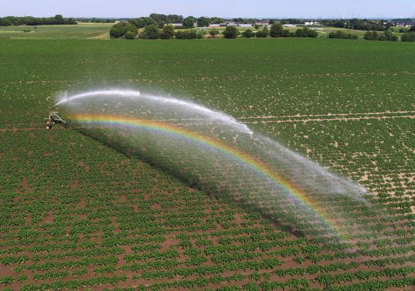 A field of potatoes is sprayed with water in Cologne, Germany.