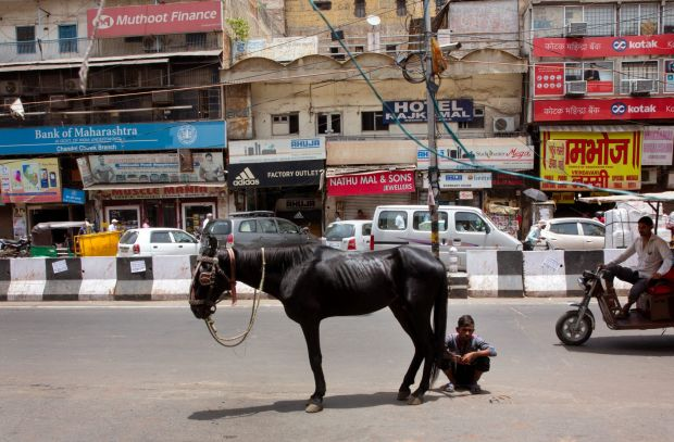 A man waits with his horse in the middle of a road as he waits to change the horseshoe on a hot summer afternoon in New ...