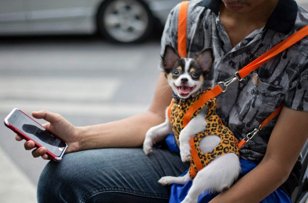A man with a pet dog hung in a dog-harness checks his mobile phone from his motorbike at a street corner in Bangkok, ...