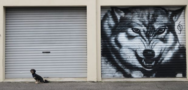 Dog and Mr Wolf street art in Windsor.