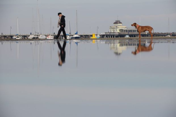 Red dog reflecting at St Kilda Beach on a still winters day.