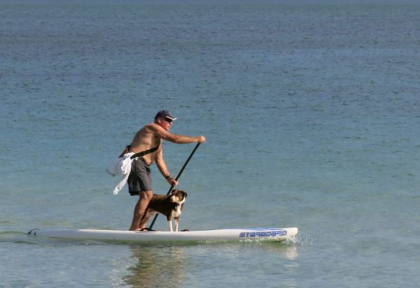 Hot dog on stand up paddle board at Middle Park beach.