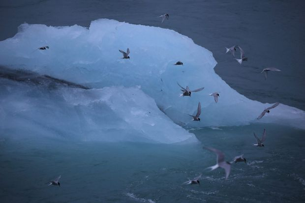 Icebergs that calved from glaciers are seen in Jokulsarlon, Iceland.