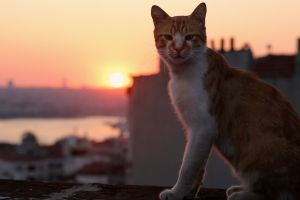 Cool for cats: documentary set in the Turkish city of Kedi.