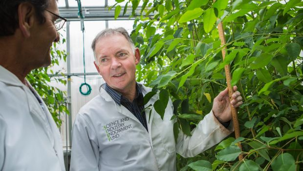 Australian National University scientist Graham Farquhar is the first Australian to win a Kyoto Prize.