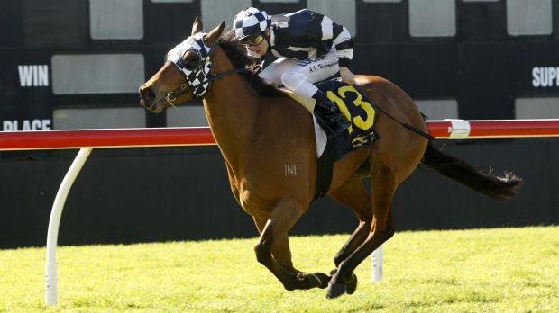 Chasing a black-type win: Sort After has built a handy collection of four wins and five seconds in 15 starts.