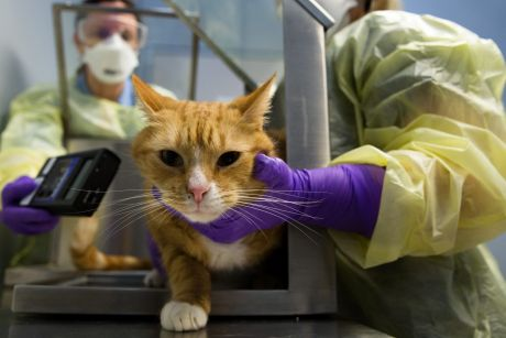 Vet Lara Boland, left, and veterinary nurse, Tiffany Formosa demonstrate how they test a cat for radioactivity after it ...
