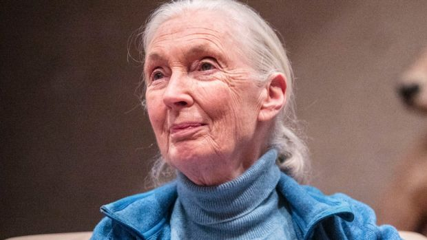 The audience at South Bank was captivated by Dr Jane Goodall, who responded to the opening round of applause with a ...