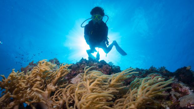 The diving industry is one worried about the draft changes.