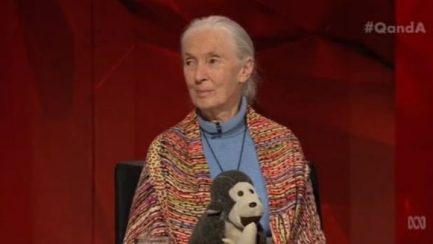 Jane Goodall appeared on Monday night's Q&A with the help of a furry friend, Mr H.