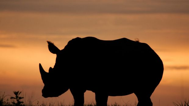 The tipping point – where the rhino kill rate exceeds the rhino birth rate – has long been reached.