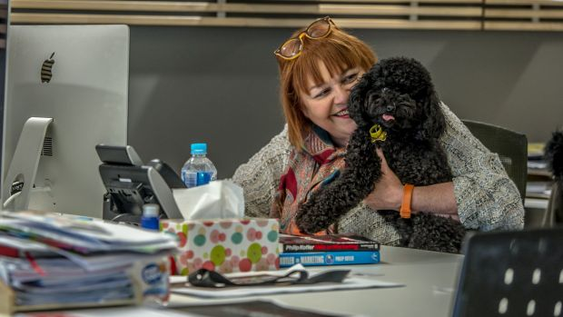 International Bring Your Dog to Work Day is a day like any other for Canberra pooch Coco and her owner Judy Waters.