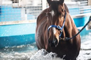 Matthew Dale's Fell Swoop doing some pre-training at Aquagait, near Sydney.